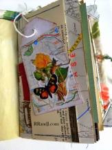 butterfly 1e